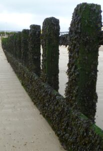 Take care by looking along the groynes covered in seaweed